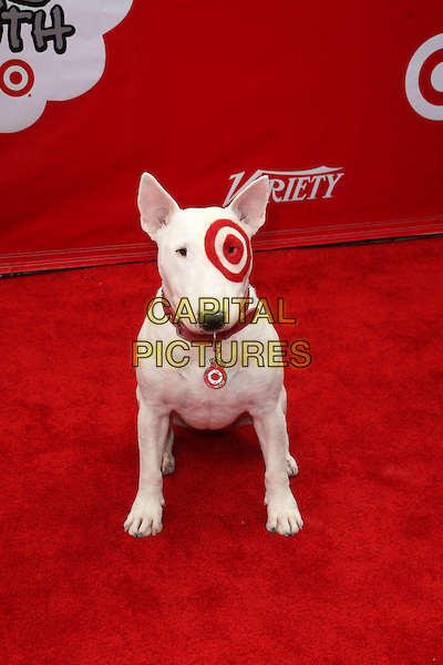 BULLSEYE THE DOG .Target Presents Variety's Power of Youth held at LA Live, Los Angeles, California.04 October 2008. .animal pet painted eye red target logo .CAP/ADM/KB.©Kevan Brooks/Admedia/Capital PIctures
