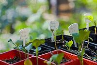 Young herbs in the nursery of an organic garden
