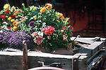 COLORFUL FLOWERS IN WEATHERED WAGON AT JACKALOPE STORE