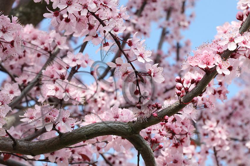 Pulm tree flowers