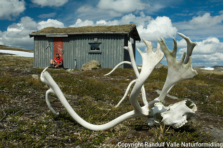 Steinfjellbua i Forollhogna ---- Hut in Forollhogna