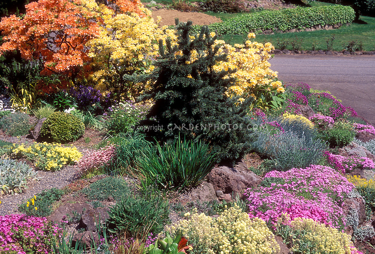 rock garden with azaleas on hill plant flower stock photography. Black Bedroom Furniture Sets. Home Design Ideas
