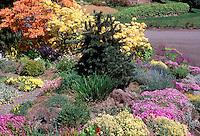 Rock garden in spring, evergreen tree, orange and yellow azaleas Rhododendrons, Dianthus alpine plants in bloom, street, curbside