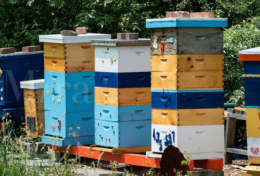 Bee hive  apiary.