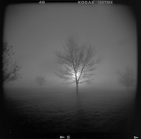 Stephen Brashear. A tree is silhouetted in the fog at Lake Hills Golf Course in Billings, Mont.