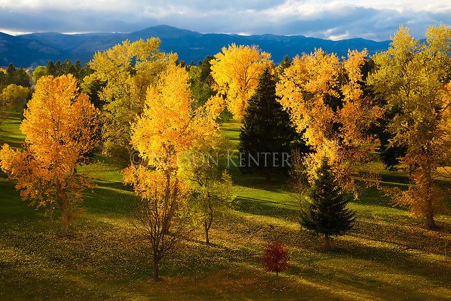 Autumn colors on the UM golf course in missoul, montana