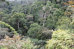 View of Tree Tops Canopy, Rainforest, Mantadia National Park, Andasibe, Madagascar