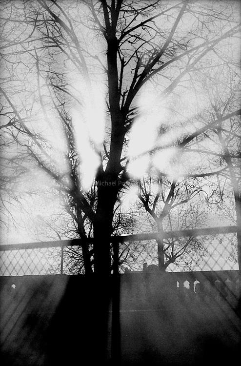 01.2003  <br /> <br /> Garden of Tuileries.<br /> <br /> Jardin des tuileries.