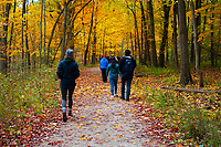 Forest Hike Glenview Illinois 10-26-19