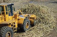 jbo70349 asia Philippines Negros industry biomass energy sugarcane factory sugar cane bagasse for energy production.Asien Philippinen Negros Industrie Zuckerfabrik Fabrik Bagasse aus Zuckerrohr Biomasse zur Energiegewinnung.copyright Joerg Boethling/agenda ph. ++49 40 39190714