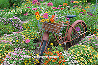 63821-22120 Old bicycle with flower basket in garden with zinnias,  Marion Co., IL