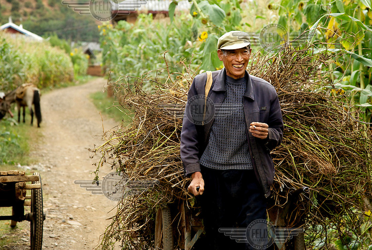 A farmer laughs as he smokes a cigarette while transporting fodder in a hand cart. /Felix Features