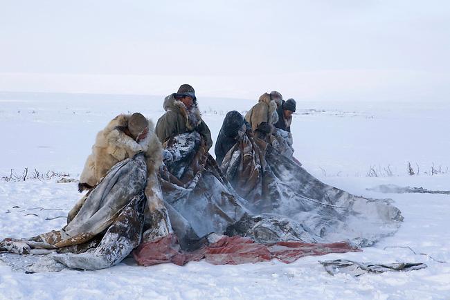 Chukchi reindeer herders prepare to put the cover on a Yaranga (traditional tent). Chukotskiy Peninsula, Chukotka, Siberia, Russia