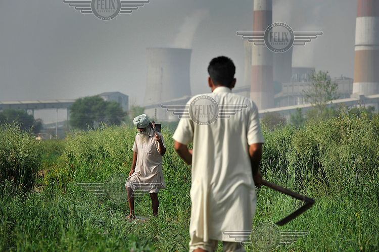 Sikh farmers collect grass using a scythe near the Guru Hargobind Thermal Power Plant. Some of the output of ash from the coal burnt in the plant escapes into the air and has been speculatively linked to health problems in the area, as well as affecting crops.