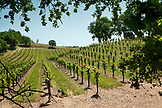 USA, California, Healdsburg, the Alexander Valley is a Californian American Viticultural Area just north of Healdsburg in Sonoma County, it is home to many wineries and vineyards