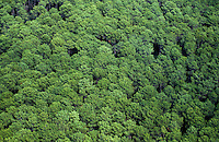 Europe/France/Aquitaine/40/Landes/Parc Naturel Régional des Landes de Gascogne/Marquèze (écomusée de la Grande Lande): La forêt des Landes