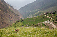 A women in a field, the village of Gatlang behind her is the first stop on the Tamang Heritage trail. Nepal 03 May, 2013