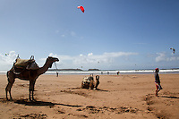 A couple of camels are photographed on the beach in Essaouira, Morocco. Essaouira is known as one of the windiest towns in Africa.