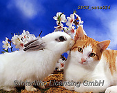 Xavier, ANIMALS, REALISTISCHE TIERE, ANIMALES REALISTICOS, cats, photos+++++,SPCHCATS924,#a#, EVERYDAY