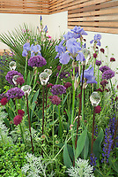 Spikes of Irises, Allium, Astrantia, Veronica in blue and purple color theme planting combination with glass topped ornaments, glass flowers