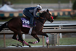 OCT 29: Breeders' Cup Juvenile Fillies entrant Lazy Daisy, trained by Doug F. O'Neill, at Santa Anita Park in Arcadia, California on Oct 29, 2019. Evers/Eclipse Sportswire/Breeders' Cup