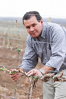 In the vineyard Chardonnay vine, Roberto Schroeder, the owner and director. Bodega Familia Schroeder Winery, also called Saurus, Neuquen, Patagonia, Argentina, South America