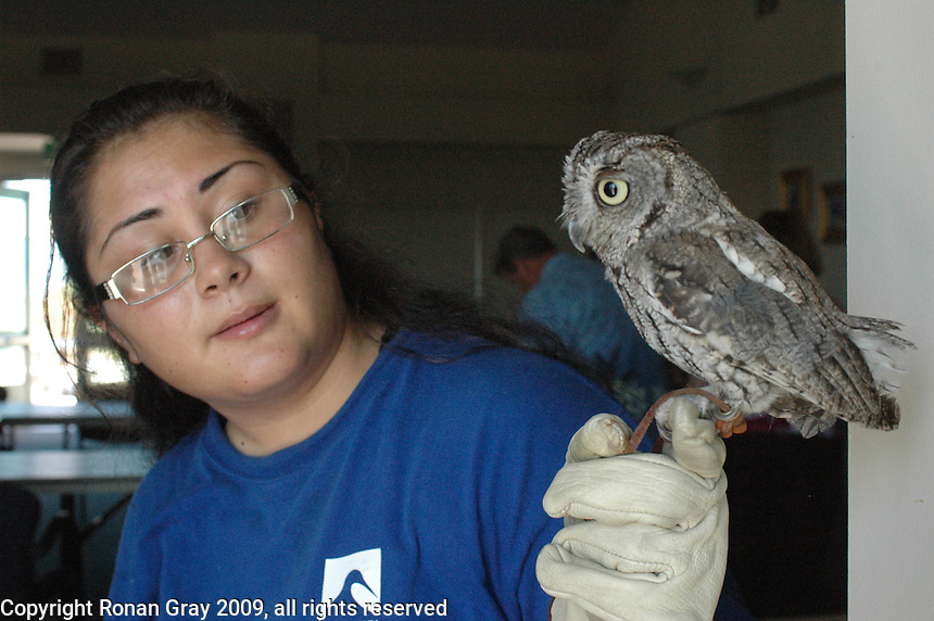 Sunday, August 2nd 2009.  Chula Vista Nature Center, San Diego, CA, USA:  Hoots the Screech Owl makes an appearance at an event for the center's annual members with handler Sara.