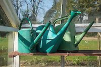 Three plastic watering cans in a greenhouse, Chipping, Lancashire.