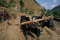 A Nepali farmer in is field in Rolpa District