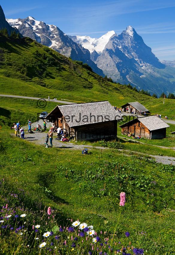 CHE, Schweiz, Kanton Bern, Berner Oberland, Grindelwald: Grosse Scheidegg - Blick auf die Gipfel von Eiger (3.970 m) mit Eigernordwand und Moench (4.107 m)   CHE, Switzerland, Canton Bern, Bernese Oberland, Grindelwald: Grosse Scheidegg - view at peaks of Eiger (3.970 m) with Eiger-Northface and Moench (4.107 m)