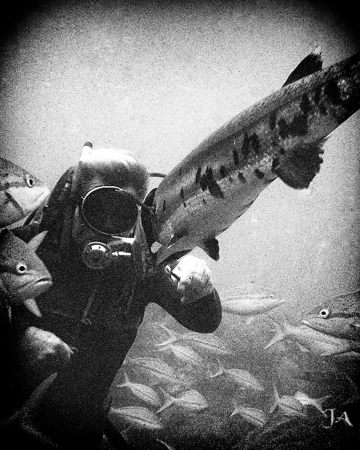 Diver Steve Klem hand feeding a baitfish to a Giant Barracuda in the Florida Keys. Black and White.