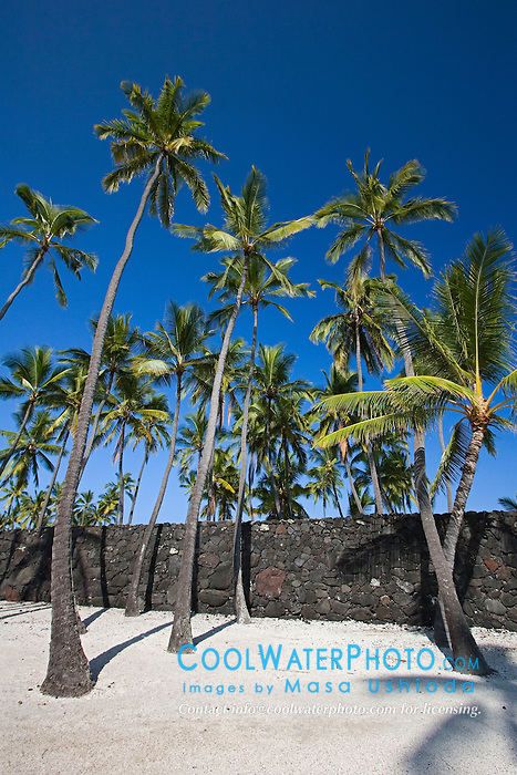 The Great Wall, bult in the mid-1500s by Hawaiians, and Coconut Palms, Cocos nucifera, Pu`uhonua o Honaunau or Place of Refuge National Historical Park, Honaunau, Big Island, Hawaii