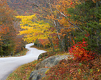 USA, Maine, Road leading through Camden Hills State Park