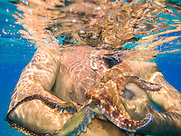 A man wearing a fish hook pendant holds an octopus (or he'e) in the ocean, Hawai'i.