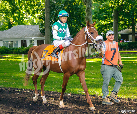 RB Sand Castle before The Arabian Juvenile Championship (grade 3) at Delaware Park on 9/24/16