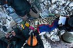 Snow Leopard (Panthera uncia) biologist, Shannon Kachel, veterinarian, Ric Berlinski, volunteer, David Cooper, biologist, Rahim Kulenbek, and ranger, Urmat Solokov, collaring male snow leopard, Sarychat-Ertash Strict Nature Reserve, Tien Shan Mountains, eastern Kyrgyzstan