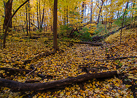 A mostly dry creek be is covered in autumn leaves, Hammel Woods Forest Preserve, Will County, Illinois