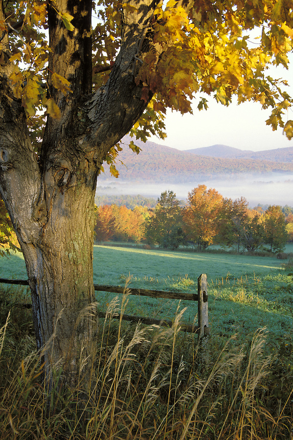 Pasture framed by maple tree at sunrise, Danby Four Corners, Rutland County, Vermont
