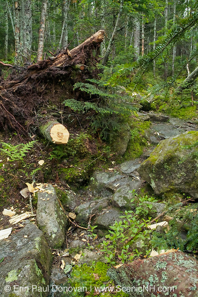 A freshly cut blowdown that has been removed with the use of an axe along the Greenleaf Trail in the White Mountains of New Hampshire.
