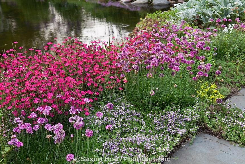 Flowering perennial groundcovers (Dianthus, Thyme, Armeria) edging pond in Barrington Hills, Illinois garden