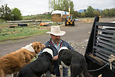 USA, Oregon, Enterprise, Cowboy and Rancher Todd Nash loads his dogs onto his truck at the Snyder Ranch for a cattle drive in Northeast Oregon
