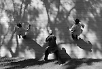 ENCINITAS, CA - MARCH 30:  A general view the Shaolin Monks running off a wall at the West Coast Martial Arts School on March 30, 2015 in Encinitas, California. (Photo by Donald Miralle)