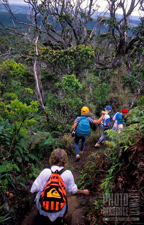 Hiking throguh native rainforest on the Pihea Trail, access to Alakai Swamp Trail near Kokee State Park, Kauai.