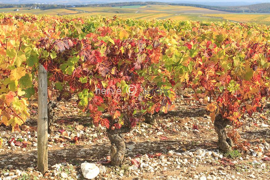 France, Cher (18), région du sancerrois, Sury-en-Vaux, le village et le vignoble en automne, AOC Sancerre // France, Cher, Sancerre region, Sury-en-Vaux, vineyards in autumn
