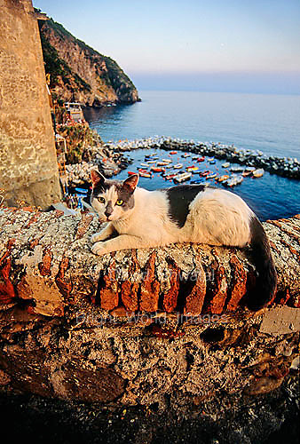 A coastal cat enjoys the sunset and view of the Mediterranean from Riomaggorie, Italy.