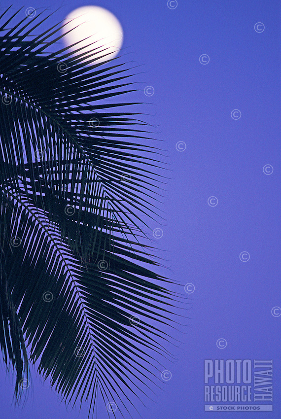 full moon peeking out from silhouetted palm fronds at twilight