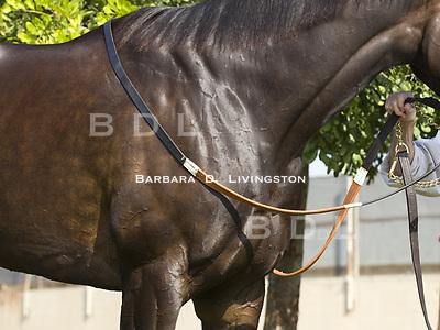 2010 Horse of the Year Zenyatta (Street Cry - Vertigineux) at John Shirreffs' Hollywood Park barn in late November 2010.  Steve Willard, rider; Mario Espinoza, groom.