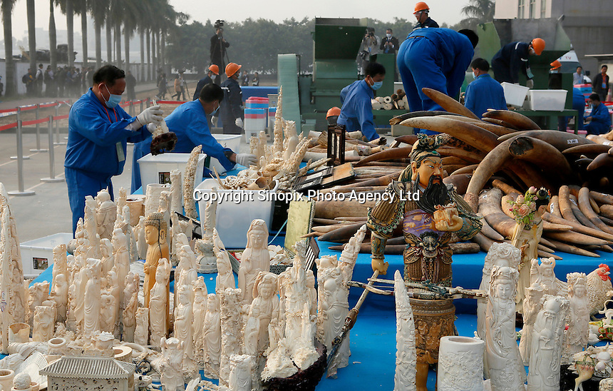 A handout photo from the Hong Kong-based 'AquaMeridian Conservation and Education Foundation' shows forestry officials handling 6.2 tonnes of confiscated ivory for crushing, under the supervision of China customs officials and China's State Forestry Administration, Huangpu Port, Dongguan, China, 06 January 2014. After the United States, Philippines, Gabon, Kenya and Zambia, China is the latest country to crush its confiscated ivory as a symbolic gesture, sending a message to consumers, traffickers and poachers in Africa and Asia that the ivory trade is wrong and will make Africa's last remaining elephant populations extinct within 15 years. Scientists estimate that 25,000 elephants were illegally killed in 2012.