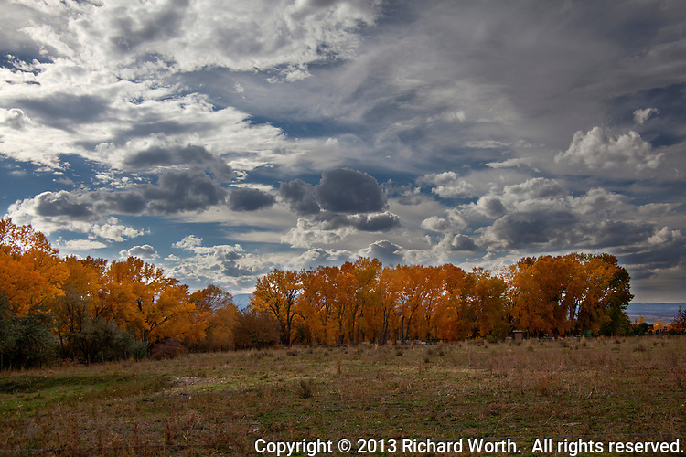Above a grove of trees in autumn gold, clouds gather, a portent of a coming winter storm on Colorado's western slope.