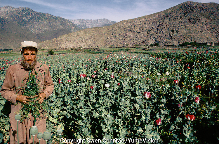 Nooristani farmer Cleaning the field before cutting and collecting the opium in East Afghanistan.